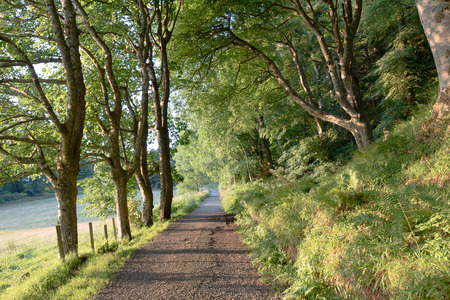 The track alongside the road leading from the Esplanade to Dunollie House in Oban Stock Photo