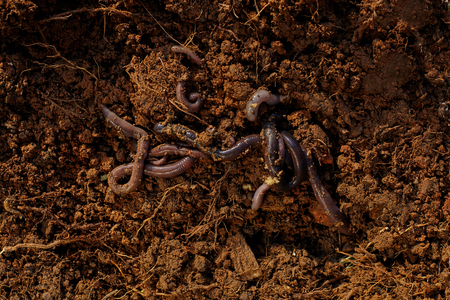 Worms on soil.
