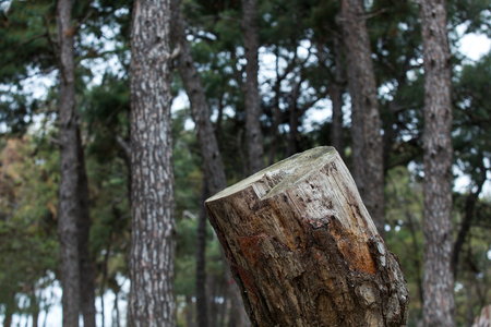 Cut tree trunk in the forest.