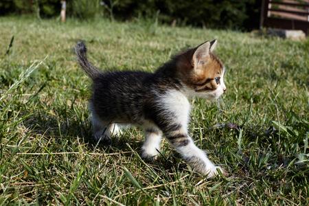 little cat in the garden. Stock fotó