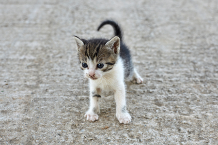 Little stray cat. Homeless kitten.