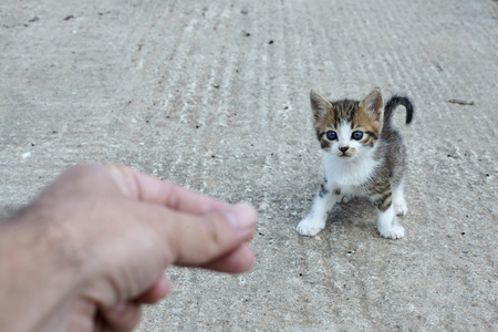 Little stray cat.Man trying to help homeless kitten.