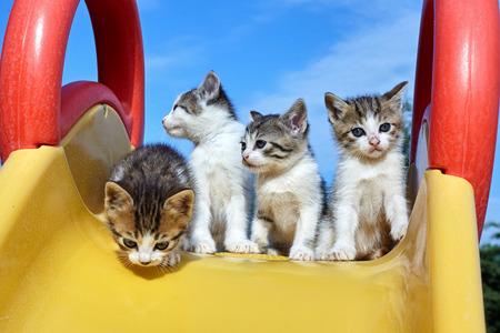 Four kitten on a yellow slide.