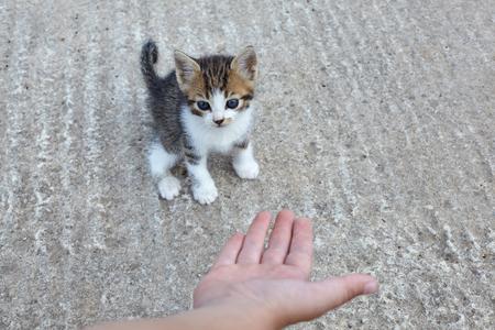 Little stray cat.Kid trying to help homeless kitten.