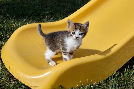 Little cat on a yellow slide.