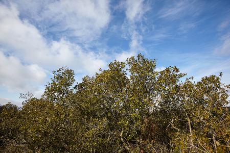 landscape of bushes and blue sky in a forest. Stock fotó - 124892163