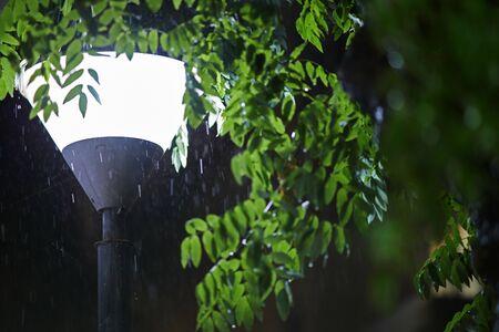 rainy night.drops and leaves. Reklamní fotografie