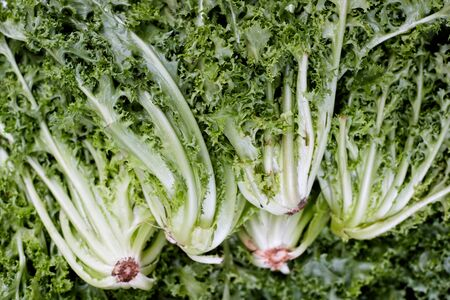 fresh green vegetables as background. Reklamní fotografie