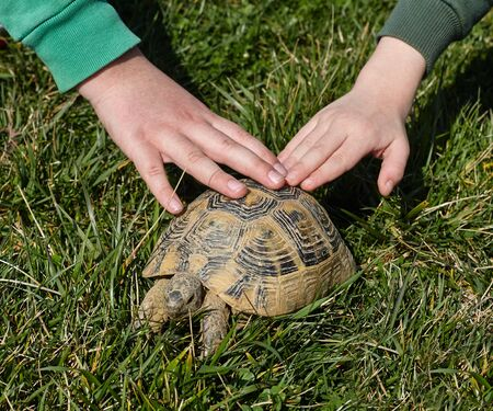 two hands on a turtle. kids and pets. Standard-Bild
