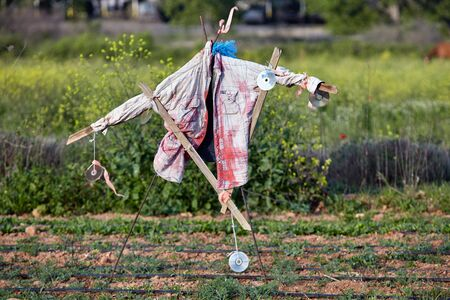 scarecrow in a field to chase away birds Standard-Bild