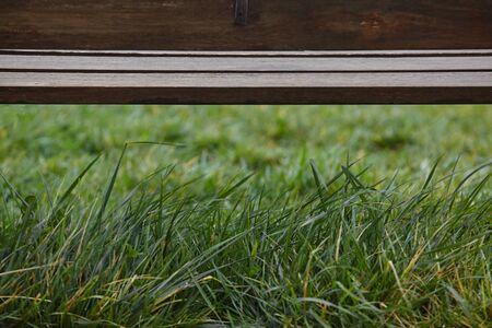 closeup view of grass and a bench. Standard-Bild