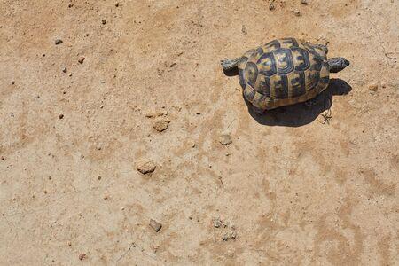 turtle on dry soil.