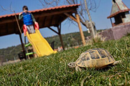 turtle in a garden. Standard-Bild