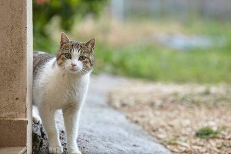 cat looking with curiosity Standard-Bild