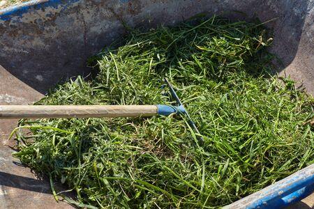 Rake with grass. Gardening.