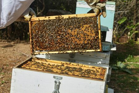 beekeeper put the honey cell in the hive. Standard-Bild
