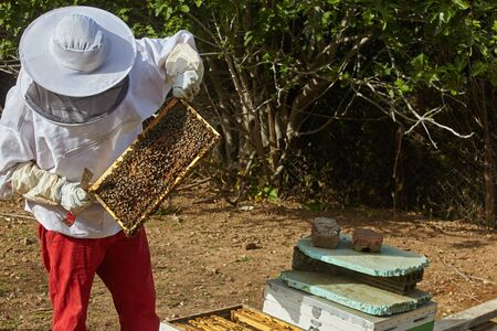 beekeeper working at the apiary.