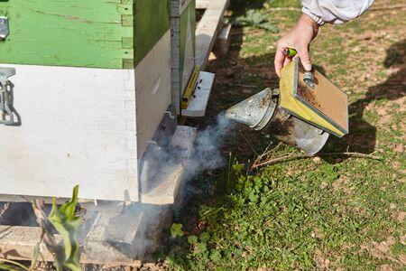apiarist using the bee smoker Standard-Bild