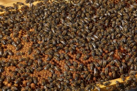 closeup view of bees on honey cells.