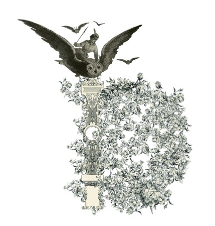 Luxuriously illustrated old capital letter D with flowers and girl flying to the owl. Stock Photo - 7153900