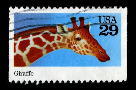 postal office: USA - CIRCA 1980: A stamp printed in USA shows image of the dedicated to the Giraffe circa 1980. Editorial
