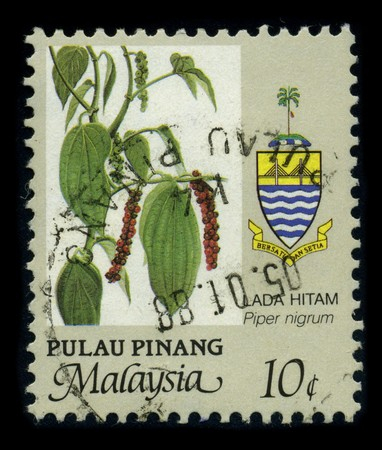 piperaceae: MALAYSIA - CIRCA 1988: A stamp printed in MALASYSIA shows image of the dedicated to the Black pepper (Piper nigrum) is a flowering vine in the family Piperaceae, cultivated for its fruit, which is usually dried and used as a spice and seasoning, circa 198
