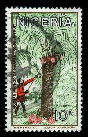 nigeria: NIGERIA - CIRCA 1980: A stamp printed in NIGERIA shows image of the dedicated to the Modern Method Of Harvest Palm Fruit, circa 1980.