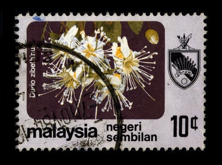 malvaceae: MALAYSIA - CIRCA 1980: A stamp dedicated to The durian is the fruit of several tree species belonging to the genus Durio and the Malvaceae family, circa 1980.