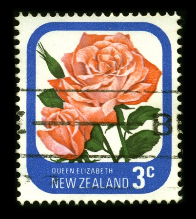 new zeland: NEW ZELAND - CIRCA 1980: A stamp dedicated to the Red rose is a perennial plant of the genus Rosa, within the family Rosaceae, circa 1980.