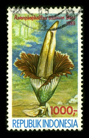 misshapen: REPUBLIC OF INDONESIA - CIRCA 1989: A stamp dedicated to the Amorphophallus (from Ancient Greek amorphos, without form, misshapen + phallos, penis, referring to the shape of the prominent spadix) is a large genus of some 170 tropical and subtropical t