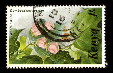 malvaceae: KENYA-CIRCA 1980:A stamp printed in KENYA shows image of the Dombeya acutangula is a plant species belonging to the family Malvaceae. It is native to Africa, circa 1980.