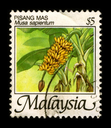 cancelled stamp: MALAYSIA - CIRCA 1980: A stamp dedicated to the Pisang Mas is a type of banana which is harvested from a banana tree, circa 1980.
