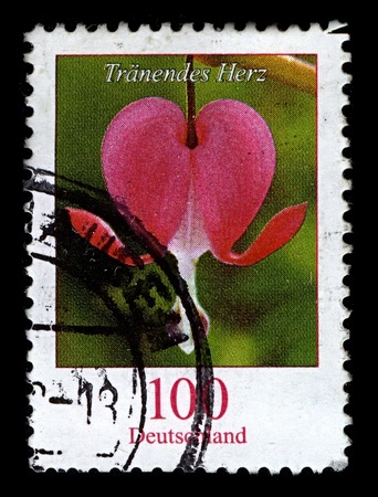GERMANY-CIRCA 2006:A stamp printed in GERMANY shows image of Lamprocapnos spectabilis (formerly Dicentra spectabilis; old-fashioned bleeding-heart, Venus Stock Photo - 10321633