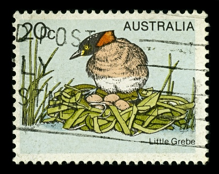 AUSTRALIA-CIRCA 1979:A stamp printed in AUSTRALIA shows image of The Little Grebe (Tachybaptus ruficollis), also known as Dabchick, is 23 to 29 cm in length, circa 1979.