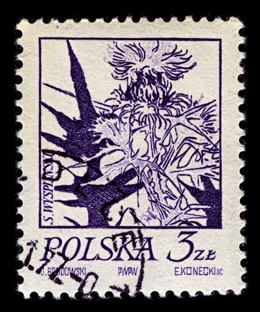 characterised: Poland-CIRCA 1974:A stamp printed in Poland shows image of Thistle is the common name of a group of flowering plants characterised by leaves with sharp prickles on the margins, circa 1974. Editorial