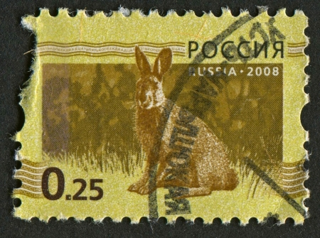 mediaval: RUSSIA - CIRCA 2008: A stamp printed in Russia shows image of the hare on green-brown background, circa 2008.