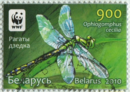 mediaval: BELARUS - CIRCA 2010: A stamp printed in Belarus shows image of the Dragonfly Ophiogomphus cecilia, circa 2010.  Editorial
