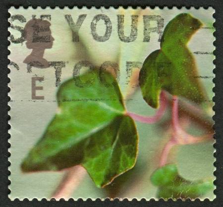 mediaval: UK - CIRCA 2002: A stamp printed in UK shows image of the Ivy, circa 2002.  Editorial