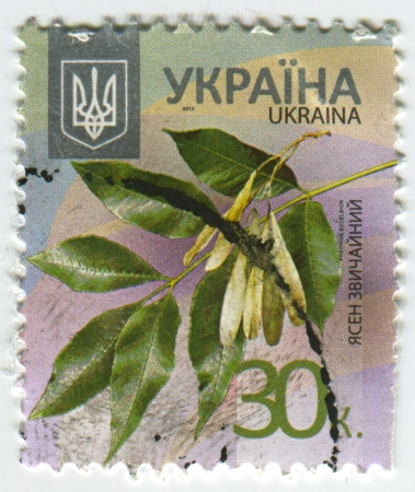 distinguish: UKRAINE - CIRCA 2013: A stamp printed in Ukraine shows image of the Fraxinus excelsior — known as the ash, or European ash or common ash to distinguish it from other types of ash - is a species of Fraxinus native to most of Europe with the exception of