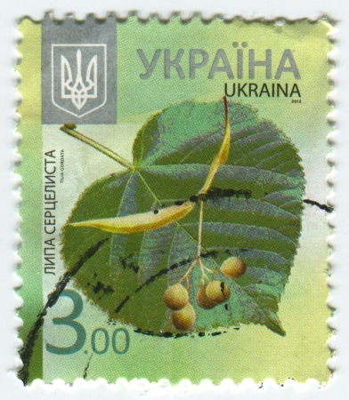 tilia cordata: UKRAINE - CIRCA 2013: A stamp printed in Ukraine shows image of the Tilia cordata (Small-leaved Lime, occasionally Small-leaved Linden or Little-leaf Linden) is a species of Tilia native to much of Europe and western Asia, circa 2013. Editorial