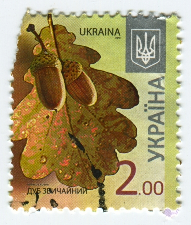 english oak: UKRAINE - CIRCA 2013: A stamp printed in Ukraine shows image of the Quercus robur (synonym Q. pedunculata) is commonly known as the English oak or pedunculate oak or French oak, circa 2013. Editorial