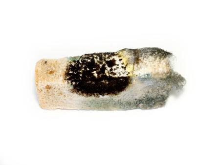 perishable: Moldy bread. Stock Photo