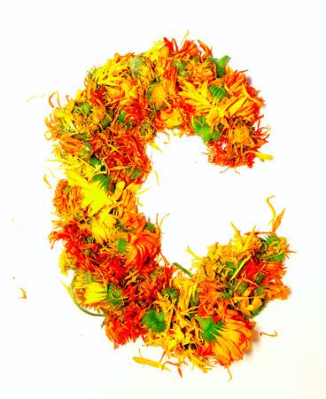 calendula: Initials letter Ð¡.