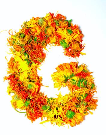 calendula: Initials letter G.