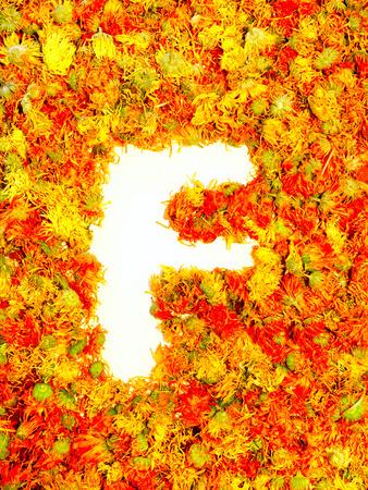 calendula: Initials letter F.