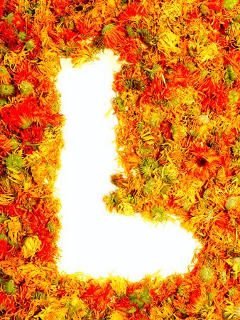 calendula: Initials letter L.