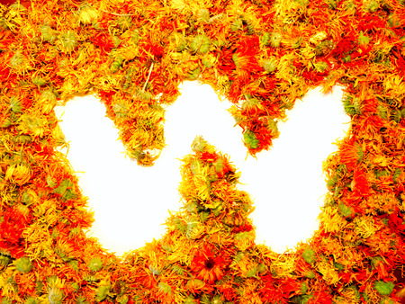 calendula: Initials letter W.