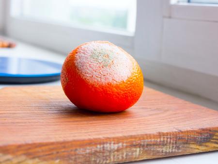 rotten fruit: Orange fruit rotten on a colored background. Stock Photo