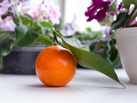 mandarin: The mandarin.