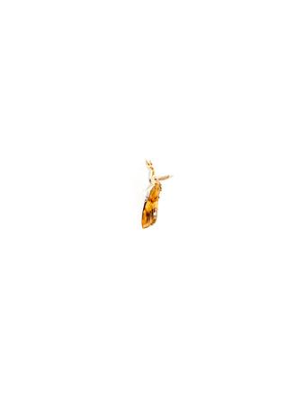 animal mole: The Orange moth (Triodia sylvina). Stock Photo